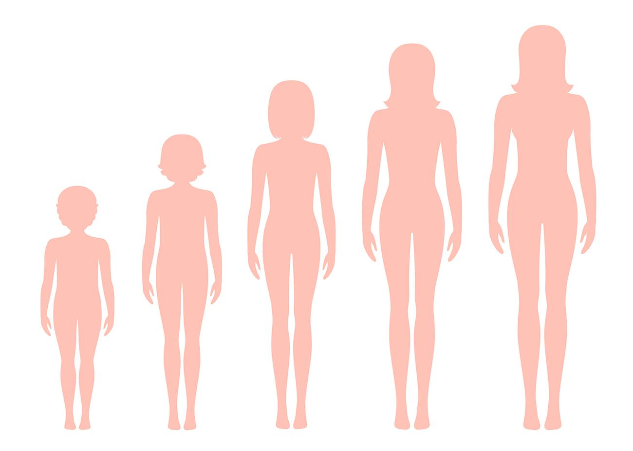 Fases reprodutivas da mulher: entenda cada época da vida